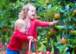 Happy little children, cute toddler girl and adorable funny baby boy, brother and sister, playing together in a beautiful fruit garden eating apples having fun on a wheel barrow ride enjoying a warm autumn day outdoors